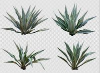 tropical plant set 01.psd