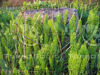 wide water plants 01.jpg