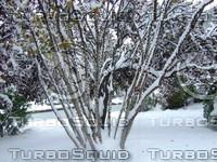 Snow Tree 20091112 146
