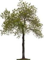 Tree010.zip