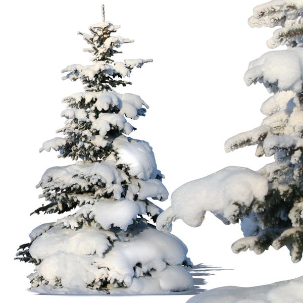 Winter-fir2p.jpg