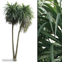 Alpha Palm Tree