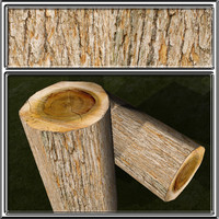 bark3.jpg