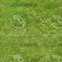 grass.jpg