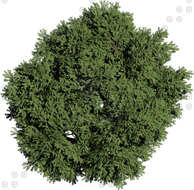 Flower Plant Png Plant Plan View Png Plant Top
