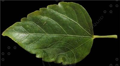 vine_leaf_preview.png