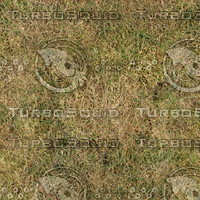 wild-grass-01.jpg