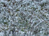 Snow Tree 20091112 016