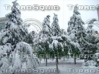 Snow Tree 20091112 038
