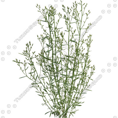 Grass_27_01.jpg