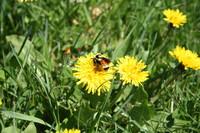 SPX_Bumblebee002