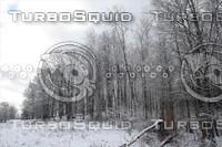 SPX_SnowyForest003