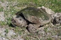 SPX_Turtle003