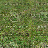 Grass texture(1)