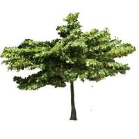 Tropical beach tree