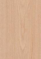 Oak Veneer Texture