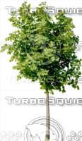 tree107