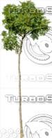 tree108