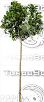 tree110