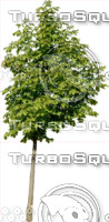 tree111