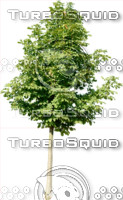 tree112