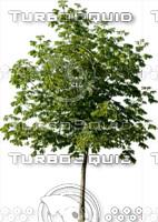 tree114