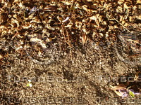 BrownLeaves_Dirt