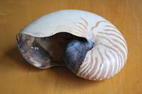 Nautilus Shell_0002