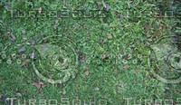 Grass(1)