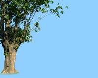 tree-34