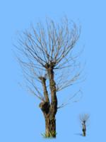 tree-43