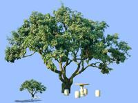 tree-51