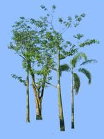 tree-70