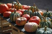 Pumpkin_0003