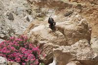 Landscape_Crete_0004