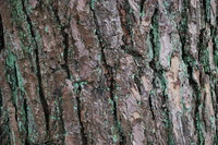 Bark_Texture Pack_0002