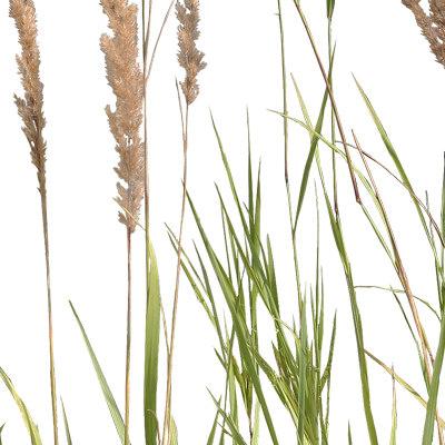 Grass_28_03.jpg