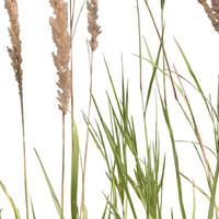 Grass_28