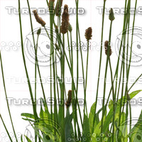 Grass_29