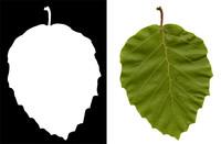 Leaf 006