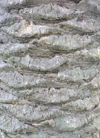 Palm Tree Bark 01