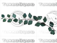 Spiraea branch