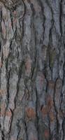Tree Bark 11