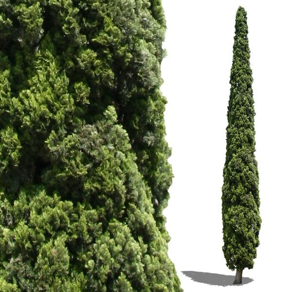 cypress1.jpg
