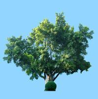 tree-25
