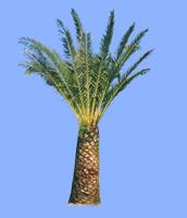 tree-30