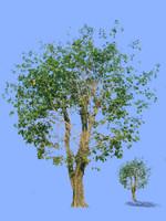 tree-31