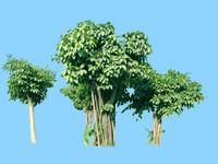 tree-39