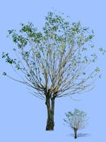 tree-47