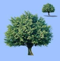 tree-48